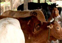 জৈন্তাপুরে চোরাচালানের তীর সীমান্তরক্ষী বাহিনী'র বিরুদ্ধে