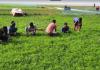 মৌলভীবাজার হাকালুকি হাওরে বাদাম চাষে সম্ভাবনা উজ্জ্বল